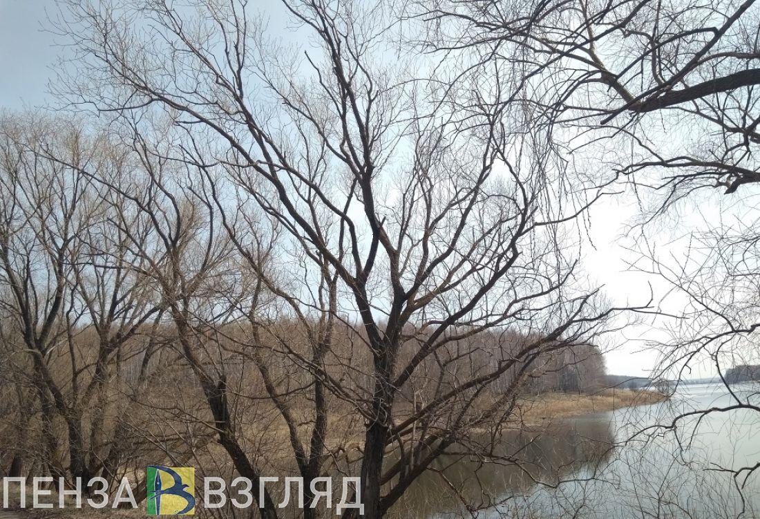 В Пензенской области следующая неделя начнется с минусовых температур